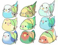 Ma lovely lovebirds