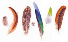 names of different feathers - Google Search