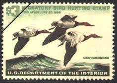 1965 Canvasbacks