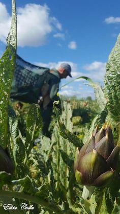 """Si aggiudica il Primo Agricontest Fotografico la foto di Elisa Collu dal titolo """"Scorci di vita di un agricoltore"""" - con 230 Like!"""
