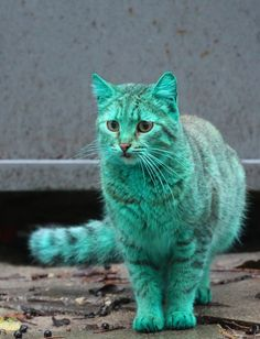 Cum arata cea mai neobisnuita pisica de pe malul Marii Negre | La zi pe Metropotam