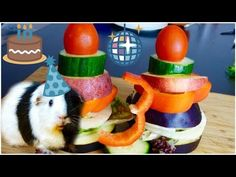 A Birthday Cake for Guinea Pigs   Happy Birthday Little One!