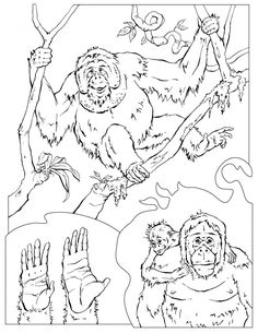 free chimpanzee coloring pages