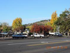 Fall colors in Flagstaff, Arizona