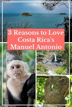 3 Reasons to Love Costa Rica's Manuel Antonio | Travel Costa Rica | Wildlife | Manuel Antonio National Park | Nature