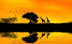 Free Africa Sunset Image As Wallpaper HD - BozhuWallpaper Sunset Pictures, Cool Pictures, African Sunset, Sunset Wallpaper, Wallpaper Wallpapers, Africa Map, Best Sunset, Bird Tree, Animal Wallpaper