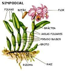 Replantando orquideas. Em que vaso plantar? Existem várias opções disponíveis no mercado de flores, mas para as residências, e ...