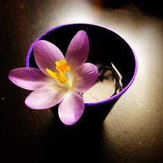 Hannah's flower
