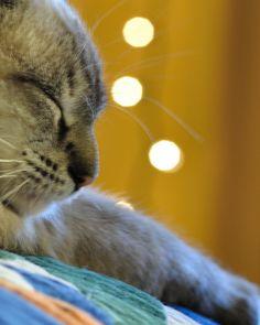 Luna's Nap | Flickr - Photo Sharing!