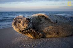 """""""Fui al norte de Dinamarca, a Skagen, y al amanecer me encontré con esta modelo"""". (Lars Lykke/Concurso Fotógrafo de Naturaleza del Año de National Geographic)"""