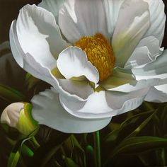 """Peony 18x18"" - Original Fine Art for Sale - © M Collier"