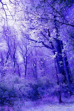 Nature beauty photography forests 38 New ideas Landscape Wallpaper, Scenery Wallpaper, Cute Wallpaper Backgrounds, Pretty Wallpapers, Iphone Backgrounds, Screen Wallpaper, Iphone Wallpapers, Cute Galaxy Wallpaper, Purple Wallpaper