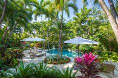 Tropical Pool Landscaping, Tropical Backyard, Backyard Plants, Backyard Paradise, Backyard Landscaping, Tropical Gardens, Paradise Landscape, Mid Century Landscaping, Pergola