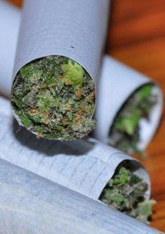 #weed#marijuana #cannabis #blunts #bongs #ganja #420 #stoner #herb #joints #herb #plants #hemp #haze #hash #smoke #smoking #high