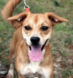 Sable is a beautiful girl! She is about 8 months old and is a Terrier mix. She is a small dog with a lot of personality!Behavior and personalities are based on what we see here at the shelter.  We do our best to work with every resident at our...