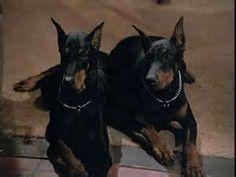 Zeus & Apollo from Magnum PI.
