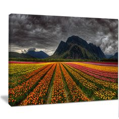 "DesignArt 'Beautiful Colored Tulips Panorama' Photographic Print on Wrapped Canvas Size: 12"" H x 20"" W x 1"" D"