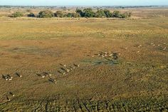 Photographic safaris in the hidden gem Zambia. image: Busanga Bush Camp