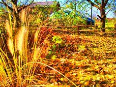 autumn hdr