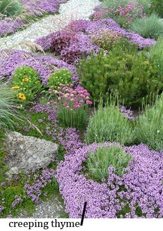 Great Groundcover: Creeping Thyme. Bright pink flowers in spring and summer, this sun lover spreads quickly, smells amazing, and even takes light foot traffic. Be aware, it does attract bees when in flower, as most plants. Drought resistant, semi evergreen and can be rejuvenated in the fall with a light shearing.