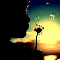 blowing dandelion in sunset    dreamgirldiaries.tumblr.com