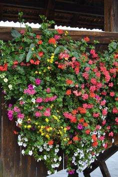 Swiss Window Box Flower Choices