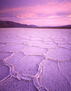 PANTONE Color of the Year 2014 - Radiant Orchid nature #radiantorchid #pantone #coloroftheyear