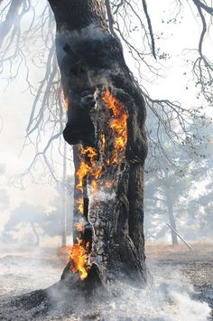 a burning life ( i honestly see a man smoking a cigarette in this photo within the tree)