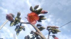 Flor de Pente de Oxumaré. (Kalanchoedaigremontiana)