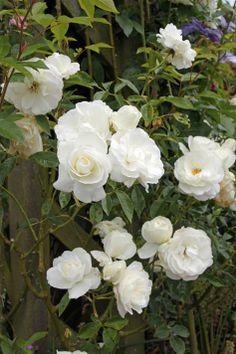 Small Gardens, Outdoor Gardens, Beautiful Gardens, Climbing, Garden Design, Pergola, Floral Wreath, Bouquet, Flowers