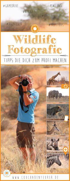 Wildlife Fotografie ist schon eine höhere Kunst, aber wenn man eine gute Ausrüstung hat, dann kann man auch als Amateur aufregende Aufnahmem machen. Wie du am Besten zu tollen Ergebnissen kommst und auch deine Aufnahmen begeistern zeige ich dir hier!