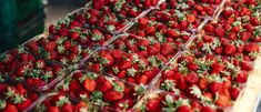 Make the most of the season's bounty by picking your own selection of berries and summer fruits. Pick Your Own Fruit, Wellington City, New Zealand Food, Fruits Photos, Stone Fruit, Summer Fruit, Simple Pleasures, Street Food, Blueberry