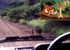 Images Timon et Pumba en vrai Images drôles Blague en image sur Humour.com