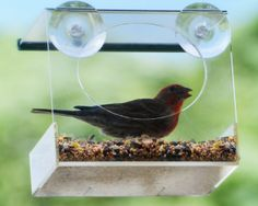 window bird feeder - just mount it to a window and watch the birds eat and play from inside your home. Best of all, squirrels can't get to it.  http://www.amazon.com/Window-Bird-Feeder-Squirrel-Proof/dp/B00E63LZO2  #birdfeeder