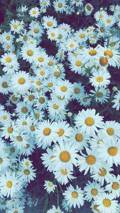 Las simples flores que para regalar se vuelven algo que enamoran