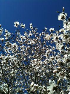 der Frühling ist jetzt definitiv da....