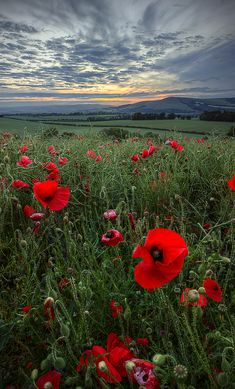Opm by *wreck-photography on deviantart - photography by michael baldwin Beautiful Flowers, Beautiful Places, Beautiful Pictures, Landscape Photography, Nature Photography, Poppy Photography, Deviantart Photography, Red Poppies, Nature Pictures