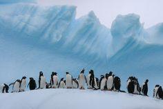 Penguins, Antarctica