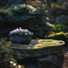 Morgonsol o minipenséer, kan inte bli annat än glad denna fredagsmorgon! Ain't No Sunshine, Bird, Outdoor Decor, Plants, Home Decor, Decoration Home, Room Decor, Birds, Plant