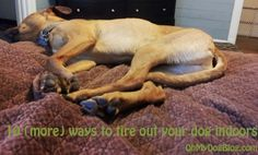 How to tire out your dog indoors....with all the rain we have had its some good advice
