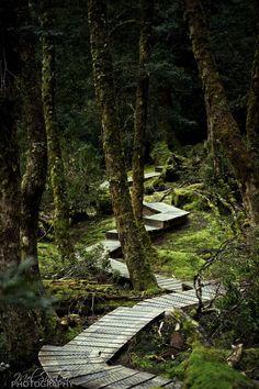 Rainforest walk at Cradle Mountain, Tasmania, Australia