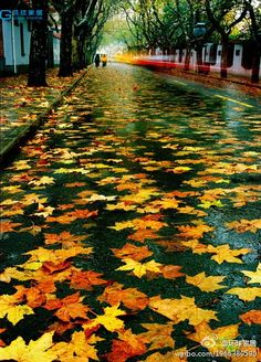 Reminds me of my favorite place, coming up the hill on FR at night  when it rains! It looks and 'feels' like you're gliding along on water!  -:- Autumn leaves - Looks like water
