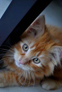 Adorable kitten - Yummypets