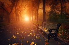 """bench in foggy autumn park"" by Sergiy Trofimov"
