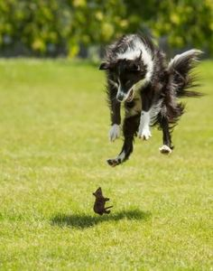 Dog Scared by Rodent Border Collie erschrickt vor Ratte/ Maus