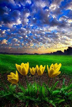 ☆ What Kind of World do You Want :¦: Photographer Phil Koch ☆