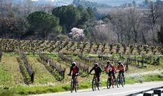 Ciclistes entre vinyes