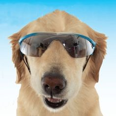 Sunglasses for dogs.   19 Insanely Clever Products That Prove We're Living In The Future