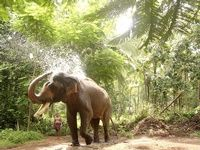 Brief description about the tourist places in Kerala.Visit Kerala and have an enchanting experience of a lifetime.Plan your Kerala trip today itself ! Elephant India, Indian Elephant, Elephant Love, Arabian Sea, States Of India, Kerala India, India Tour, Wild Creatures, Travel