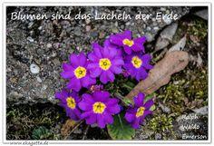 """""""Blumen sind das lächeln der Erde,"""" Ralph Waldo Emerson * Zitate * Zen * Meditation * Achtsamkeit * Sprüche * deutsch * www.ekagatta.de"""
